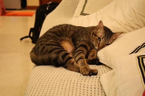 枕を使って