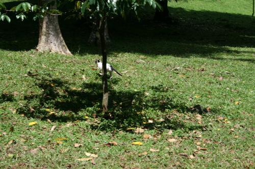 植物園猫3