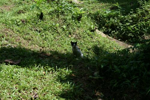 植物園猫1
