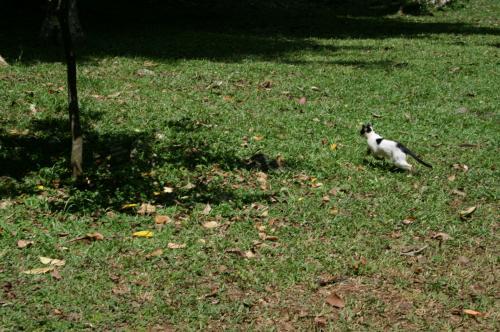 植物園猫2