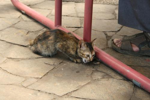 フルーツ園猫5