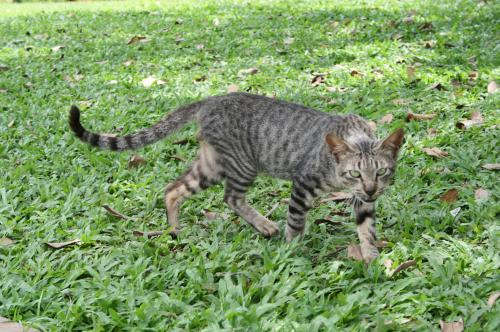 フルーツ園猫2