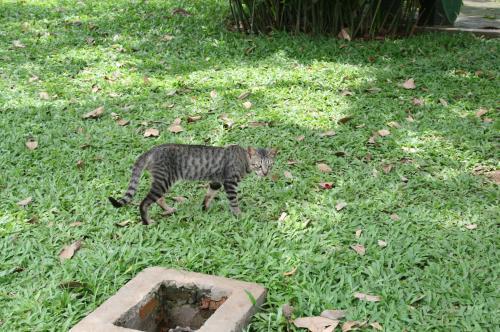 フルーツ園猫1