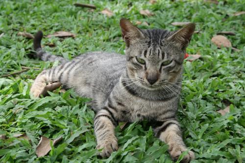 フルーツ園猫3