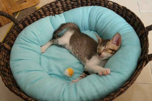 元BULANのベッド
