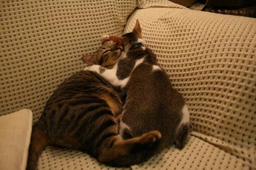 抱き合う2匹