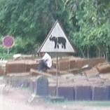 ゾウに注意