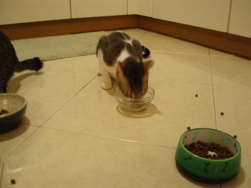 ネコ缶食べるビン