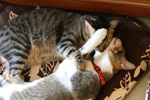 猫団子?4