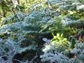 B4葉っぱに霜