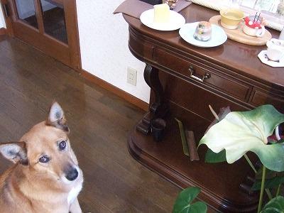 2011020711歳のお祝いご飯 003