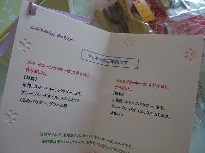 20110309バズちゃんと遊ぶ! 014