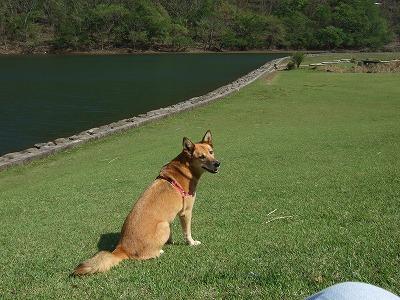 20110428奥のダム 002