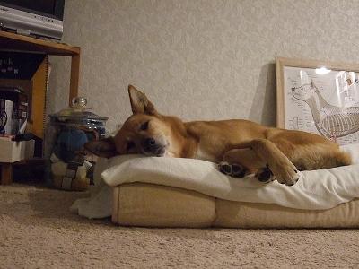 s-20110518私の布団で寝る 003