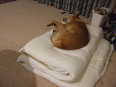 s-20110518私の布団で寝る 001