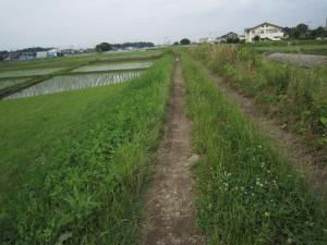 1.散歩道