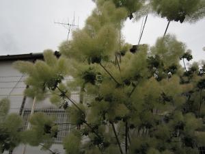 1.この木なんの木?