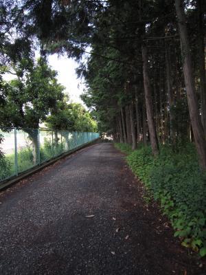 1.学校の裏道