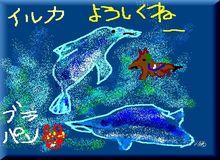 iruka-03.jpg