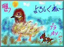 kamo-03.jpg