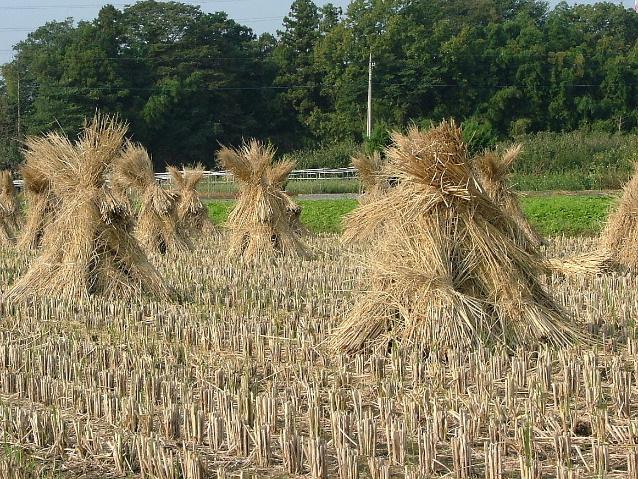 稲わらのある風景1016画像0001