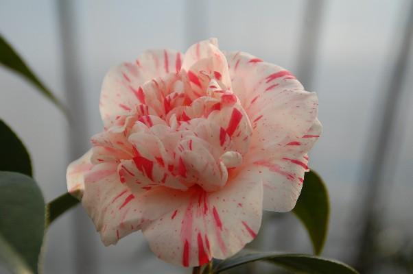 2010京唐子