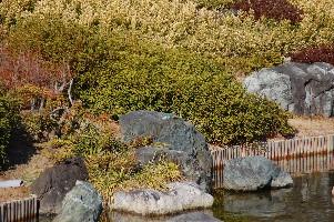 2010大仙公園カワセミ