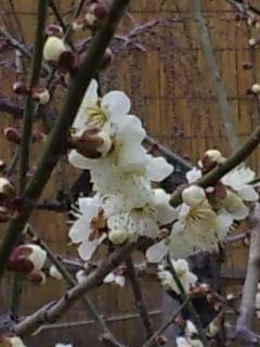 2010.2.10結城神社