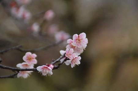 2010.2.16大阪城5