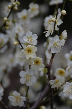 2010.2.16大阪城4