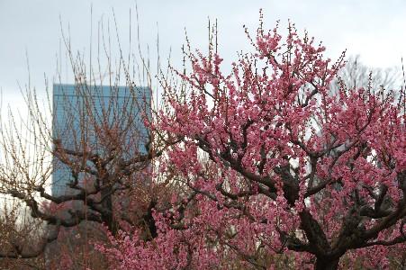 2010.2.16大阪城2