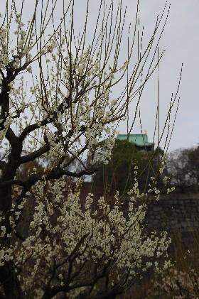 2010.2.16大阪城3