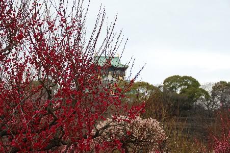 2010.2.16大阪城1
