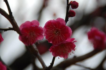 2010.2.16大阪城7