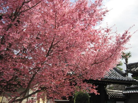 2010長徳寺4