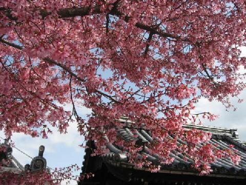 2010長徳寺2