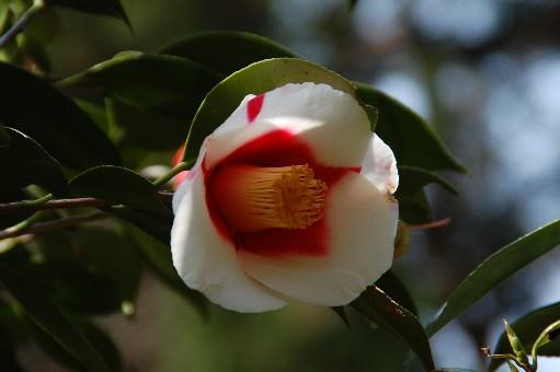 2010.3.22花の文化園17