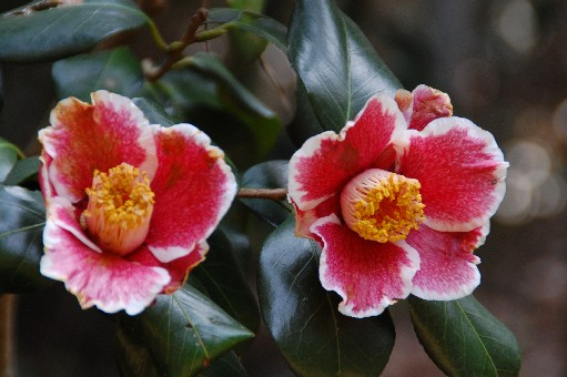 2010.3.22花の文化園18