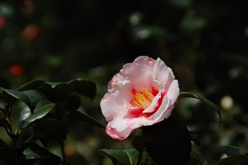 2010.3.22花の文化園16