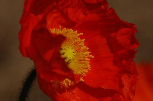 2010.3.22花の文化園24