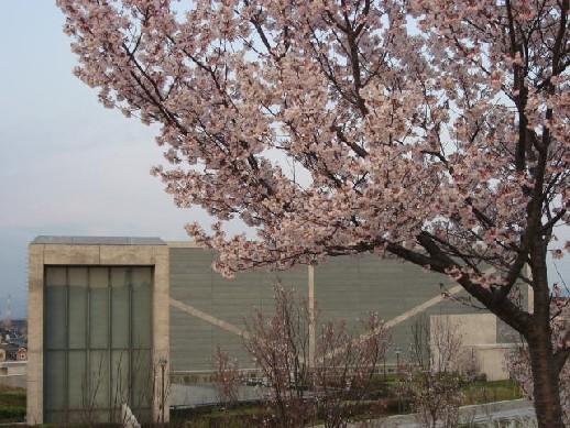 2010.3.28狭山池5