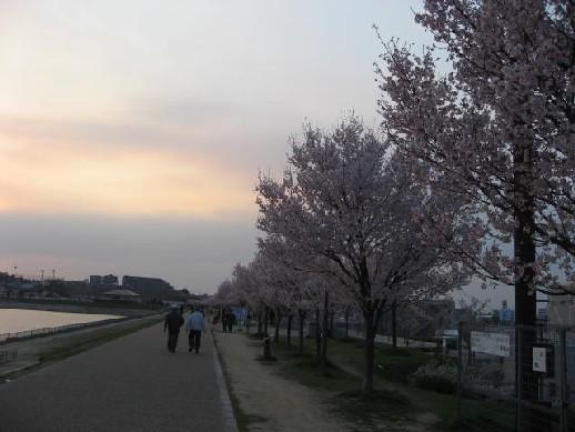 2010.3.28狭山池3