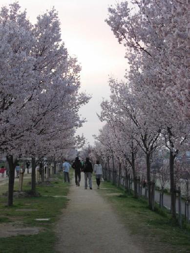 2010.3.28狭山池4