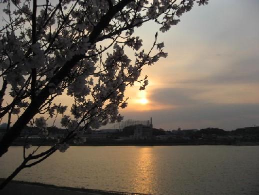 2010.3.28狭山池1