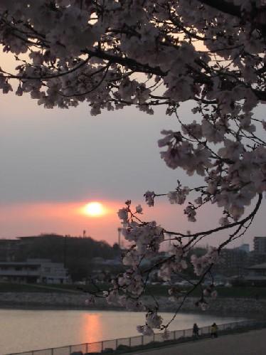 2010.3.28狭山池9
