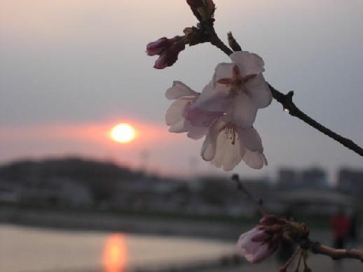2010.3.28狭山池10