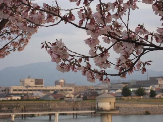 2010.3.28狭山池7
