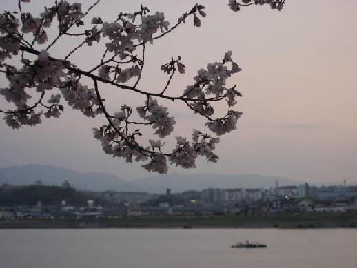 2010.3.28狭山池8