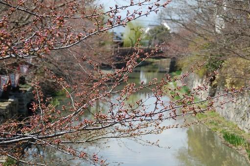 2010.3.17近江八幡12