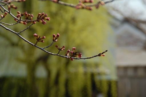 2010.3.17近江八幡9